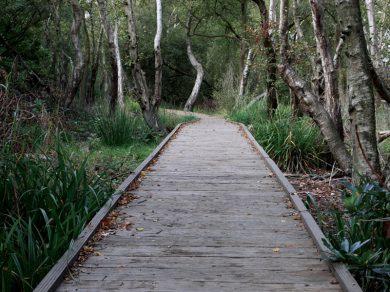 Woodland-Vintage-Boardwalk